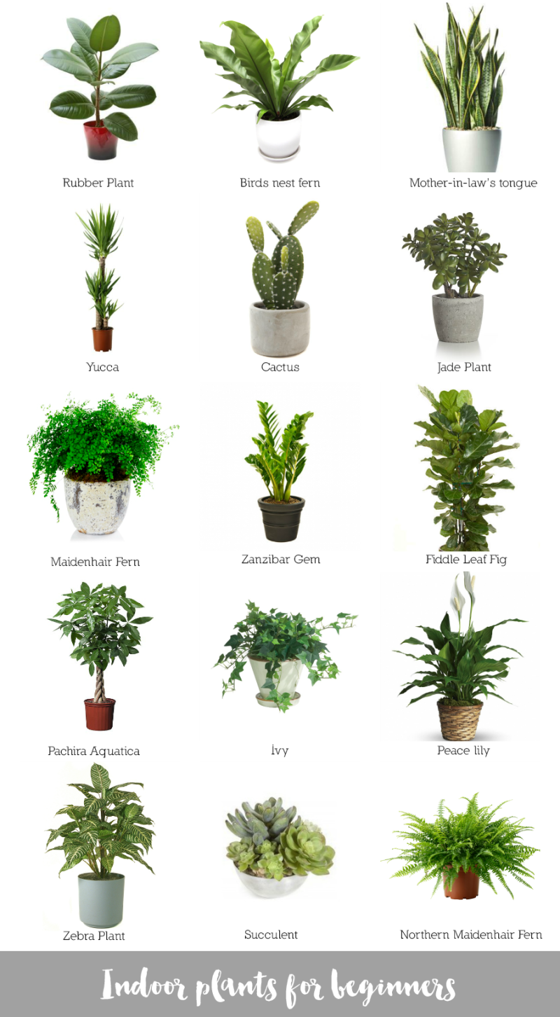 Indoor plants for beginners for Garden trees types