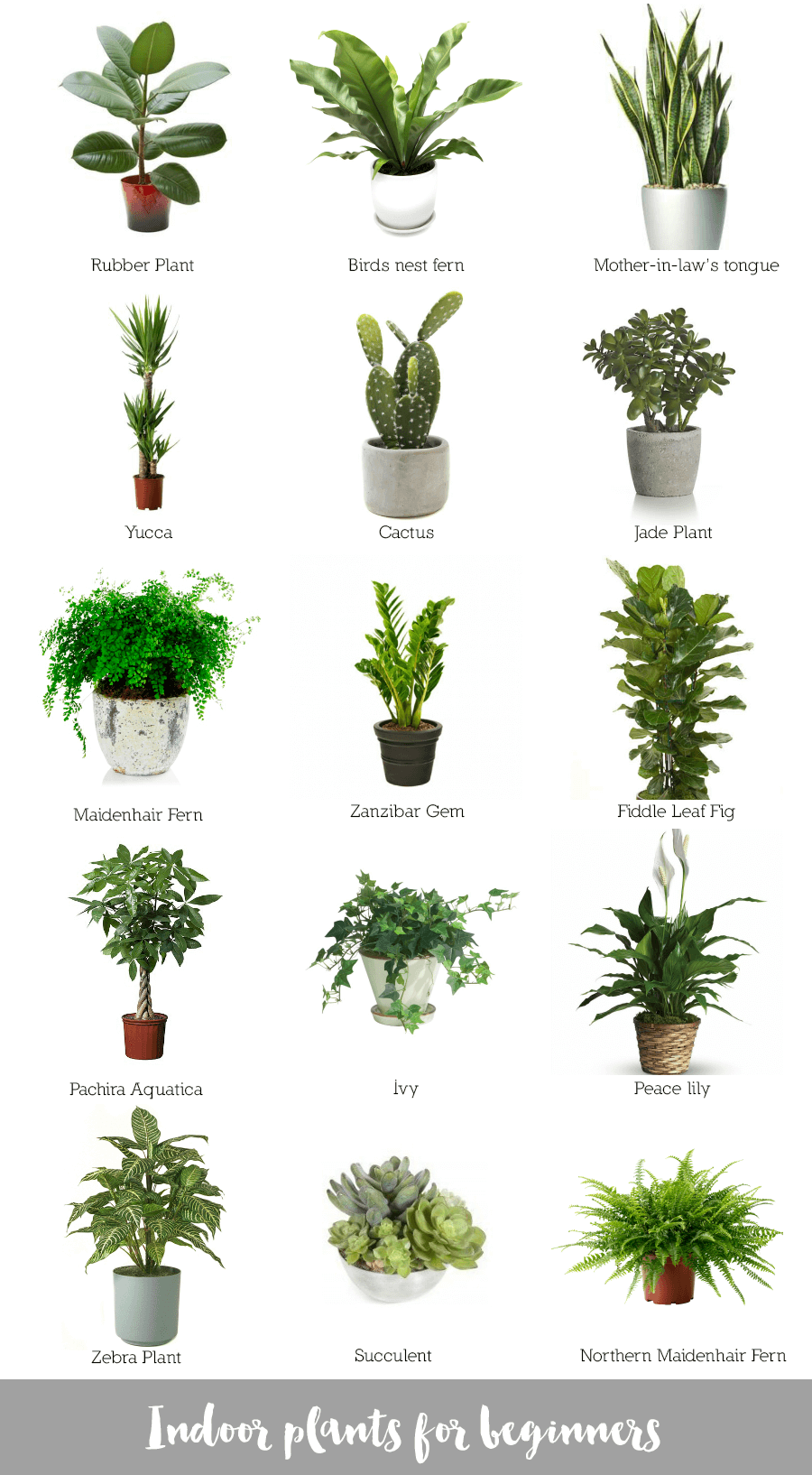 Indoor plants for beginners - Names of indoor plants ...