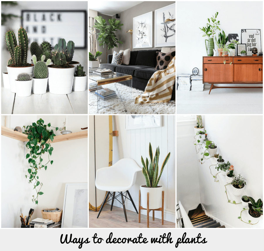Fresh Indoor Plants Decoration Ideas For Interior Home: Ways To Decorate With Plants