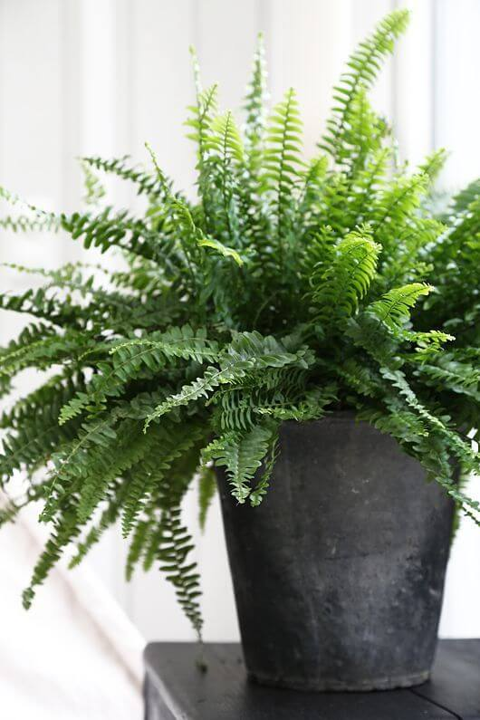 Indoor Plants For Dark Corners
