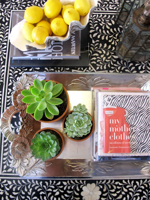 succulents coffee table