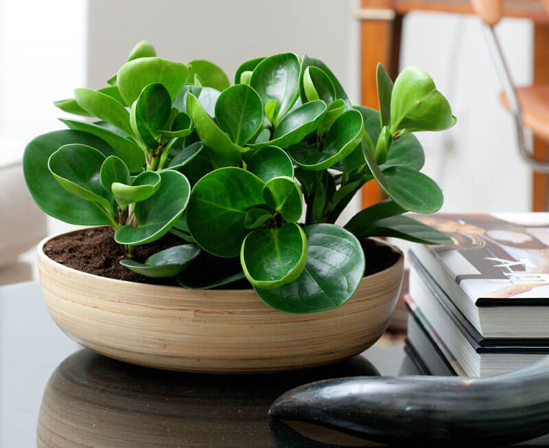 coffee-table-plants_260416_07
