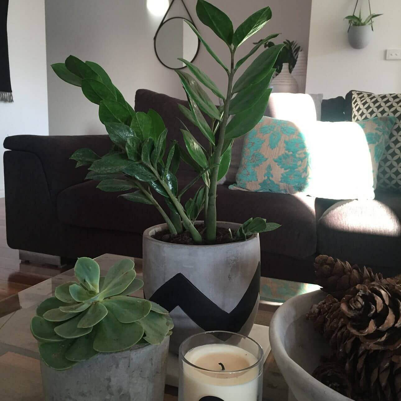 Plants for your coffee table perfect to add a bit of height to your coffee table vignette you can split them up to create new pots geotapseo Gallery