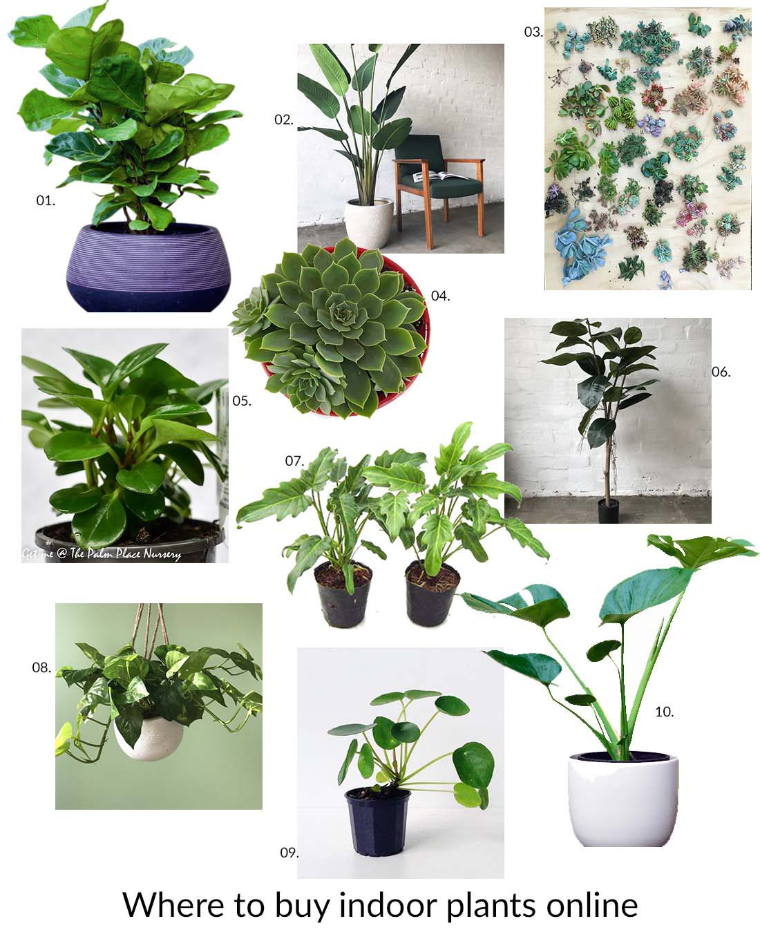 If You Re Obsessed With Indoor Plants Like Me Then Always On The Look Out For That Perfect Addition To Your Home Sometimes It S Hard Source