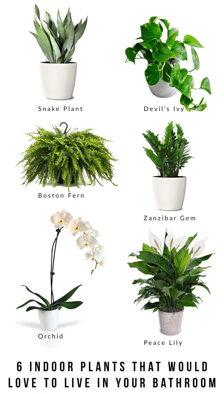 20 indoor plants that would love to live in your bathroom