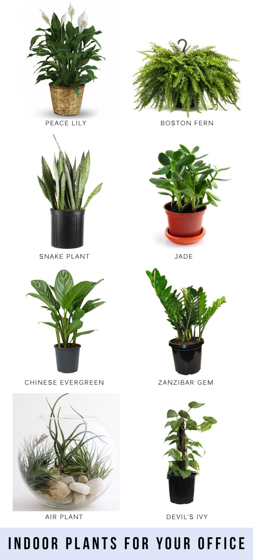 Indoor Plants For Your Office